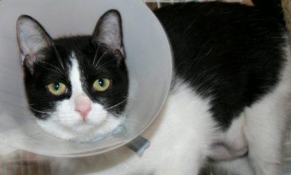 Lissone, l'Enpa salva una gattina maltrattata
