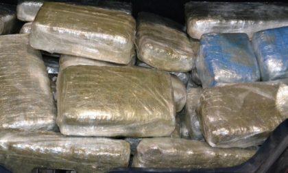 Maxisequestro di marijuana a Muggiò