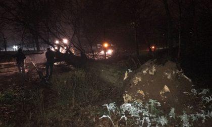 Parco di Monza: albero cade vicino al palco del Papa e travolge donna