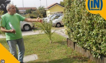 Piantumano alberi e siepi a loro spese, ma il Comune di Monza intima di eliminarli