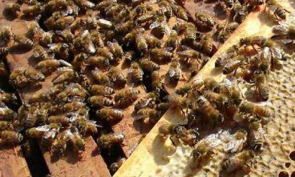 Rubano 20mila api a bordo... di un'Ape