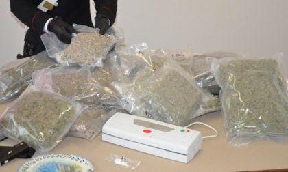 Seregno: nella cantina di casa nascondeva 14 chili di marijuana