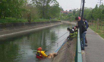 Cane salvo grazie all'intervento dei Vigili del Fuoco
