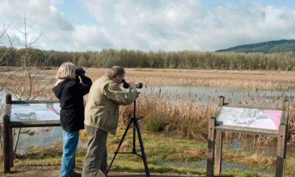 Parco Valle Lambro, un corso dedicato al birdwatching