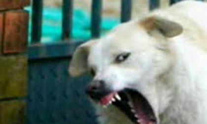 Meda – Donna aggredita da un cane finisce in ospedale
