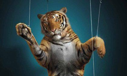 Animali nei circhi: abolizione sempre più vicina
