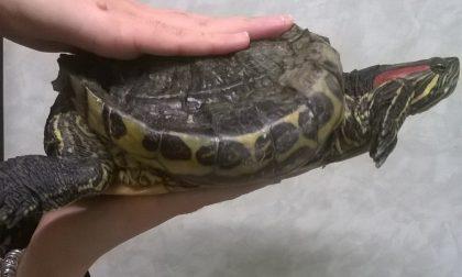TartaFriend: sabato l'evento di Enpa dedicato alle tartarughe