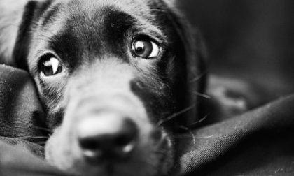 Cesano, abbandona il cane che muore di stenti: proprietario introvabile