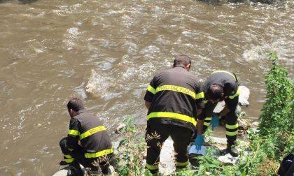 Moria di pesci nel fiume Seveso, l'allarme a Cesano