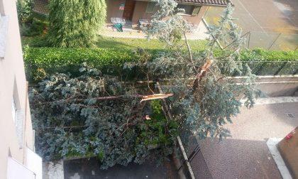 Tromba d'aria: danni anche a Monza
