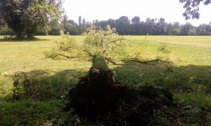 Tromba d'aria, giù 500 alberi nel parco della Villa Reale