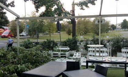 A Seregno un albero crolla sul bar, tragedia sfiorata
