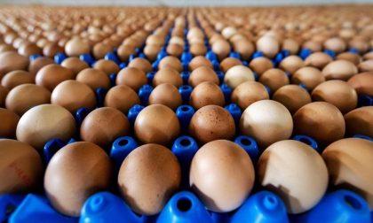 Uova contaminate: in Lombardia primi controlli negativi