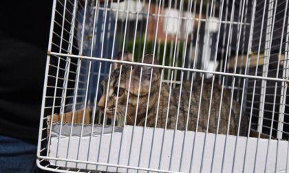 Monza: gattino abbandonato dai padroni in vacanza. Salvato dai Vigili del fuoco