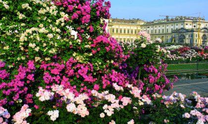 Un week end con Jane Austen al roseto della Villa Reale