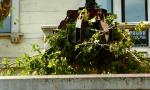 Potatura selvaggia: gli alberi che non andavano toccati – VIDEO