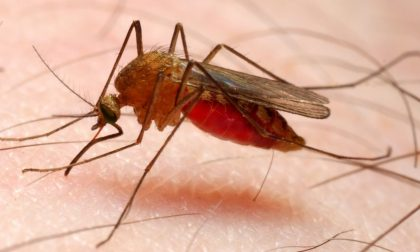 """Malaria in Lombardia, Gallera: """"Profilassi non necessaria"""""""