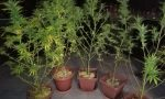 Muratore coltivava piante di marijuana