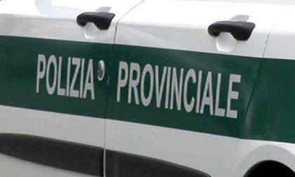 In Brianza violazioni dell'ordinanza DPCM e false dichiarazioni sulla Milano – Meda