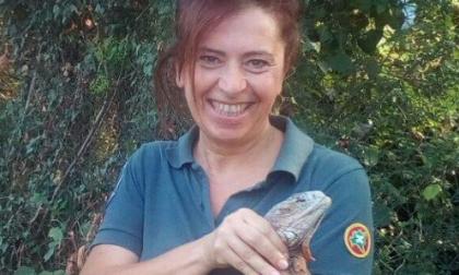 L'iguana Tiziano ha ritrovato casa