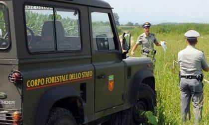 """Lombardia, M5s: """"51 veicoli del Corpo forestale inutilizzati"""""""