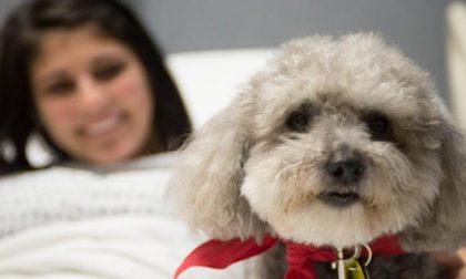 Animali domestici in reparto in Lombardia si può