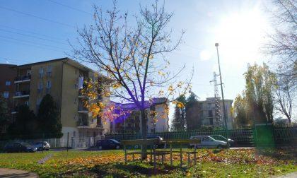 Manutenzione urbana: tutti i lavori effettuati e in corso