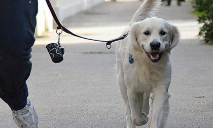 Cani a guinzaglio, campagna di Monza a 4 zampe
