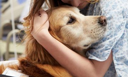 Animali in ospedale da oggi cani e gatti benvenuti ECCO DOVE