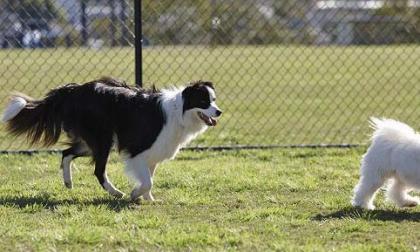 Benessere animali in Comune si parla di città pet-friendly