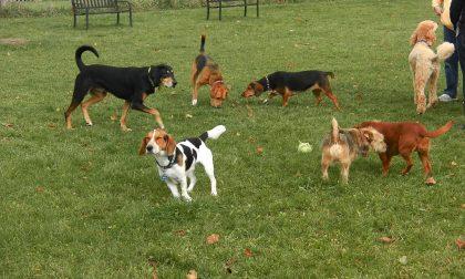 Nuovi alberi e lezione gratuita nell'area cani di via Deledda