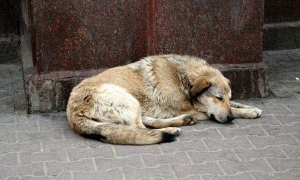 """Freddo e animali, l'appello Enpa """"Servono coperte e cibo"""""""