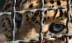 Stop agli animali nei circhi