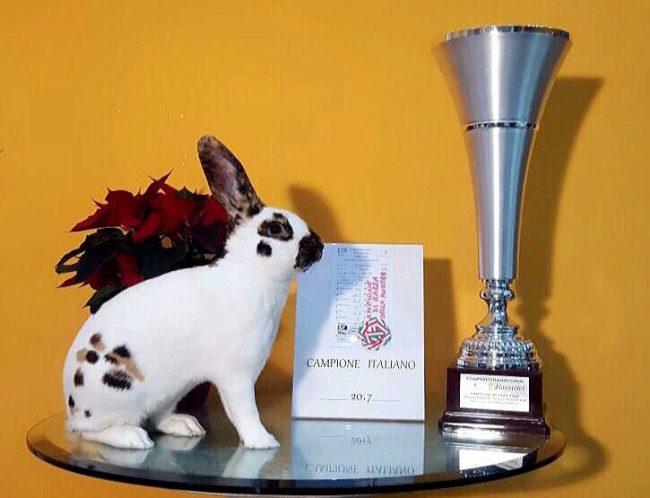 I suoi conigli sono da medaglia d'oro