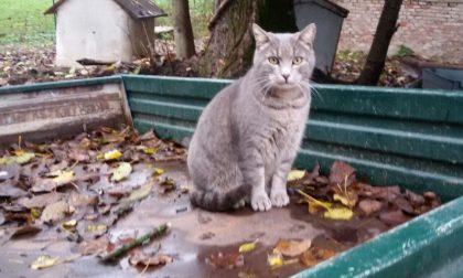 Colonie feline, sabato 23 nuova raccolta Enpa