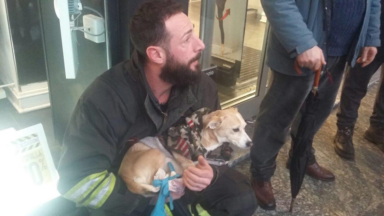 Cane incastrato nella scala mobile salvato dai Vigili del fuoco