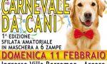 Anche i cani festeggiano il Carnevale
