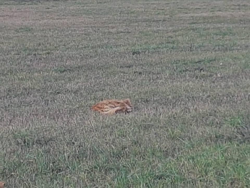 Cane libero avvistato al Cimitero di Monza