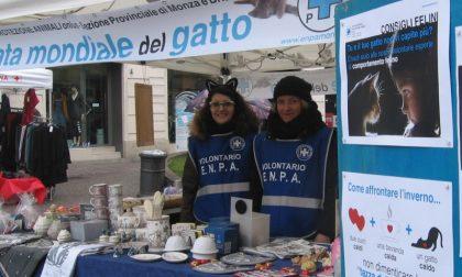 Giornata Mondiale del Gatto tutte gli eventi in città