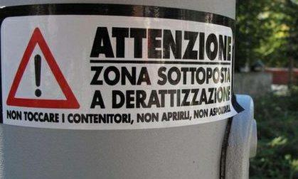 Disinfestazione contro le zanzare, partono gli interventi