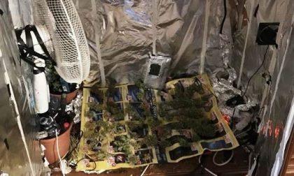 Serra di marijuana fai da te 21enne arrestato dai carabinieri