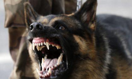 Cani violenti. Cos'è l'aggressività rediretta e come si interviene