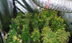 Coltivazione di marijuana in casa, beccato grazie al vicino