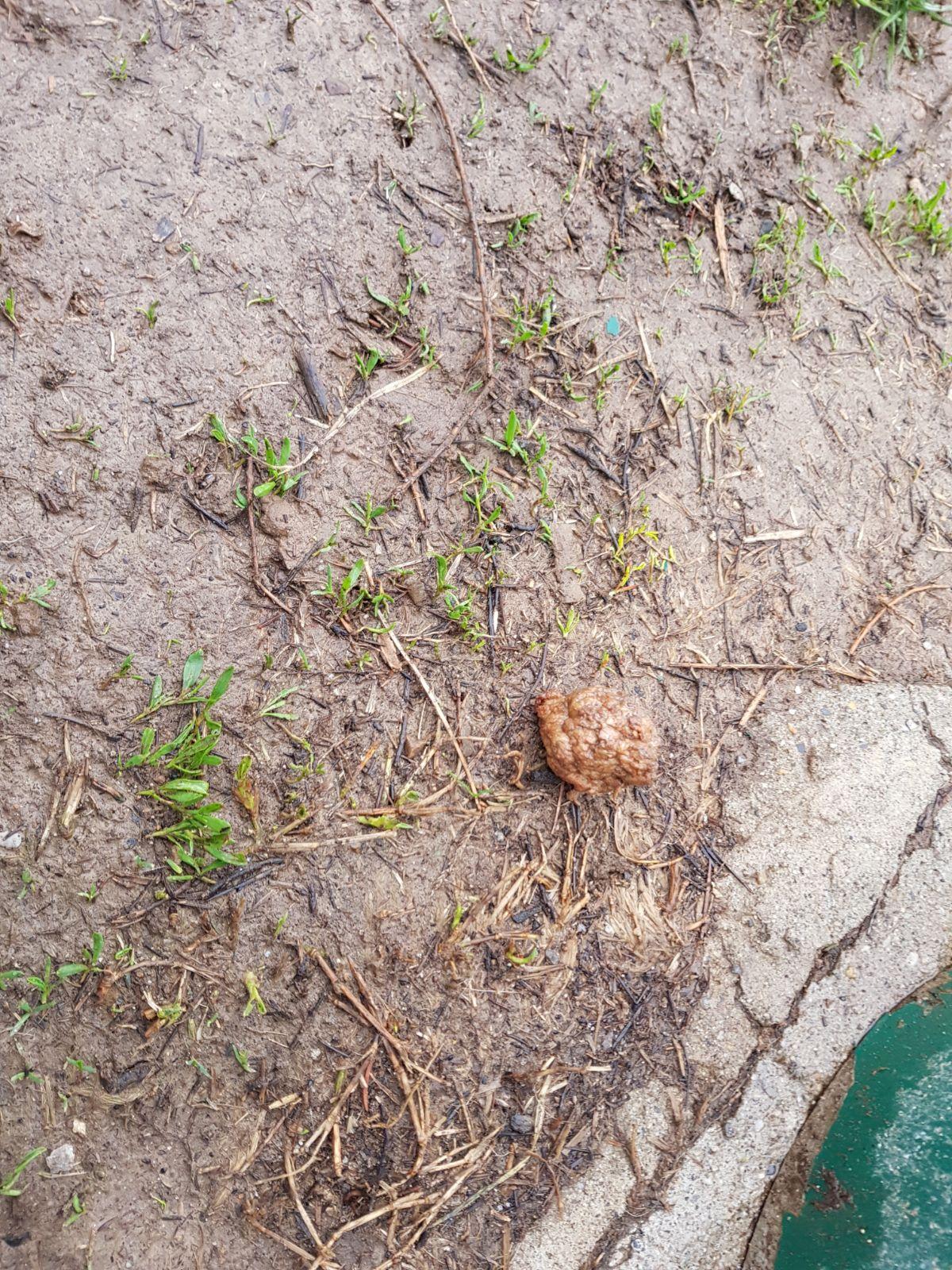 Il caso delle polpette avvelenate nell'area cani