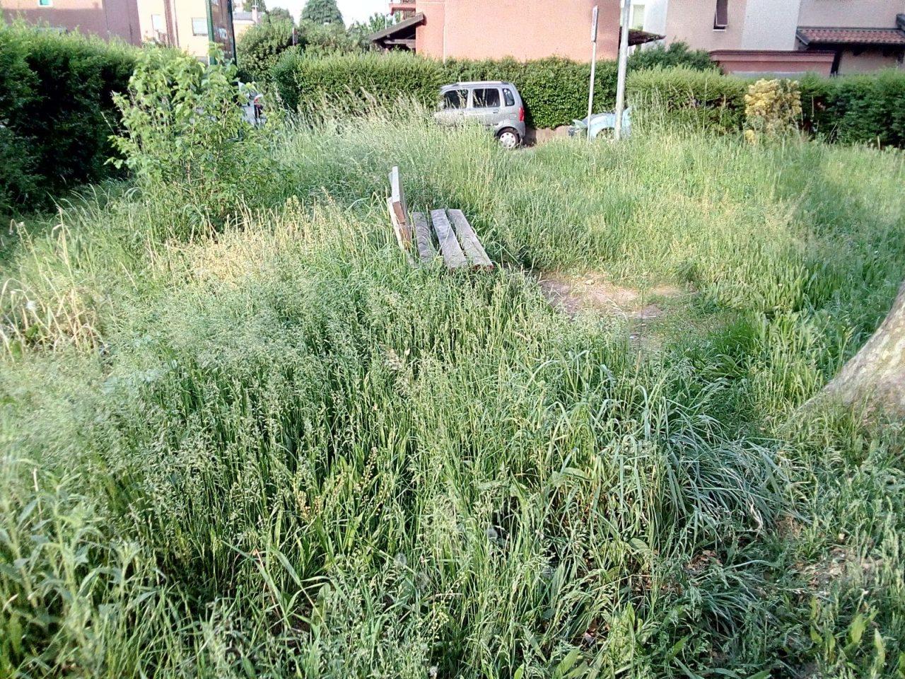 erba alta