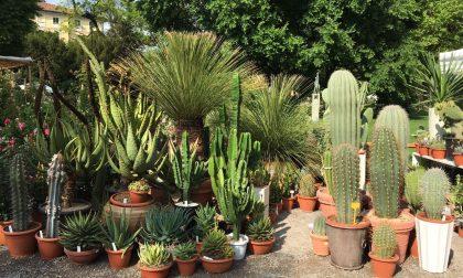Terrazzi e giardini colorati con cactus e succulente