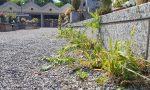 Erbacce al cimitero, la replica della ditta appaltatrice del verde pubblico
