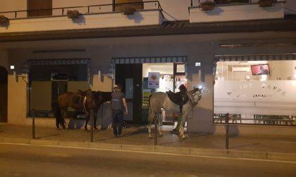 Vanno a bere il caffè a cavallo