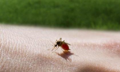 Morto per una puntura d'insetto a soli 47 anni