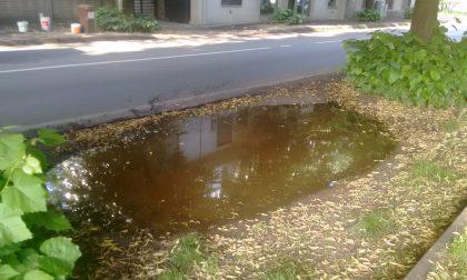 A Seregno la buca diventa una… piscina, proteste da via Wagner